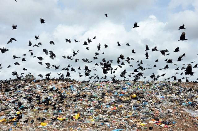 Resultado de imagem para urubu no lixo