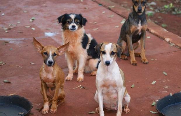 cachorros_c620400