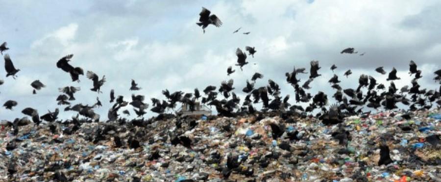 Repleto de urubus, aterro se transformou em lixão e ameaça voos