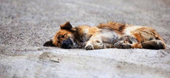 Animais abandonados sofrem no dia dia, quase invisíveis às autoridades