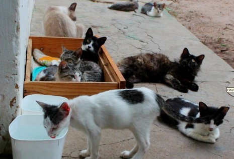 A proteção dos animais de rua é feito apenas por protetoras independentes