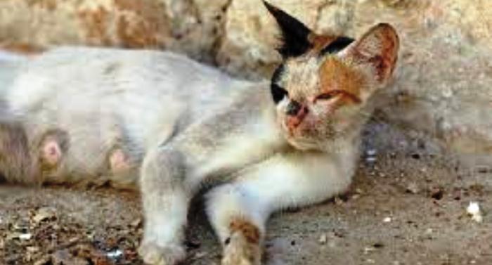 O gato abandonado sofre com feridas, frutos de maus tratos e espancamentos diários