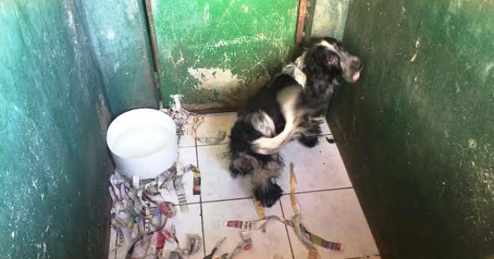 Animais de raça, como este, estavam confinados em espaços sem higiene