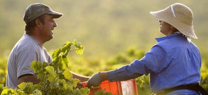 Agricultores serão beneficiados pelo projeto